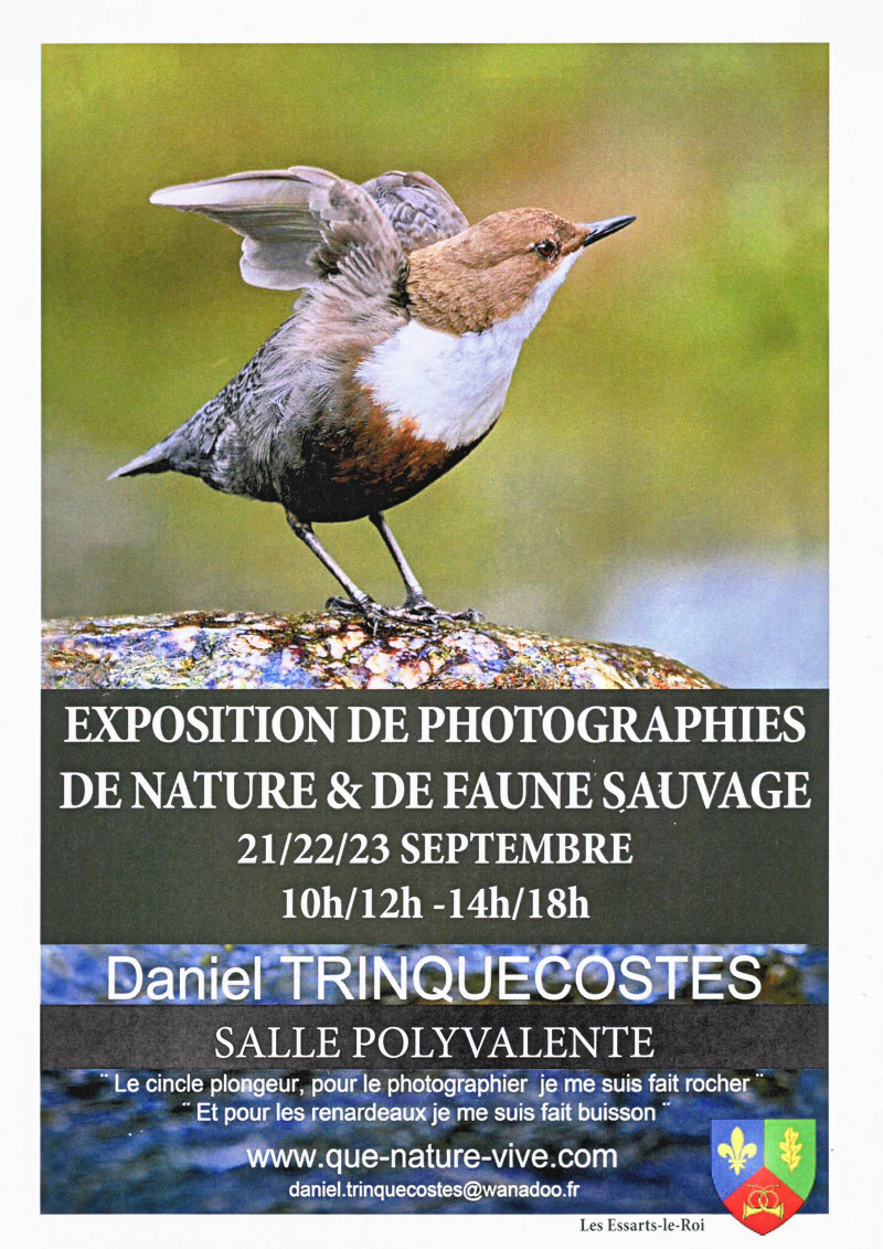 Daniel Trinquecostes expose