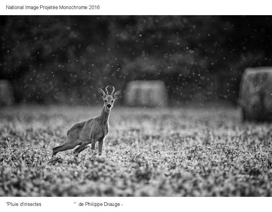 Pluie d'insectes - Philippe Drauge