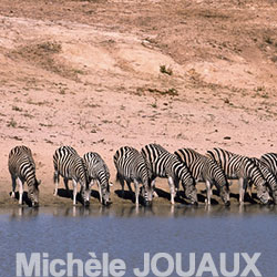 Jouaux_Michele_14_zebres