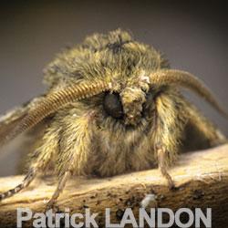 patrick-landon